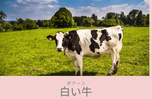 ボアーン: 「白い牛」